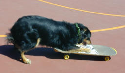 Cally begining to skateboard